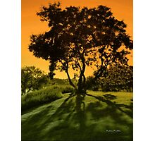 Family Tree  Photographic Print