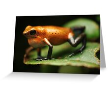 Strawberry poison frog (Oophaga pumilio Almirante) Greeting Card