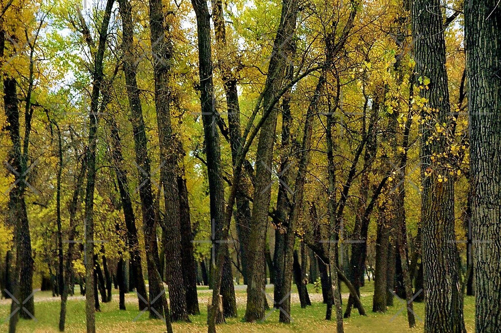 North Dakota Autumn by Julie's Camera Creations <><