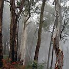 Ghosts in the Mist - Victorian Alps, Victoria Australia by Philip Johnson