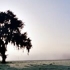 Solitary Oak by Julie's Camera Creations <><