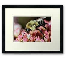 I wish she would buzz off!  :) Framed Print