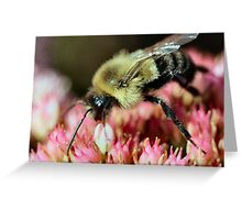 I wish she would buzz off!  :) Greeting Card