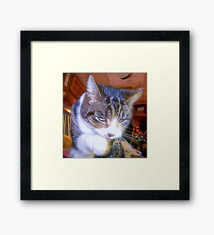 Feline Fur Cleaning Framed Print