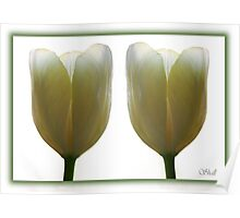 Tulips Two Poster