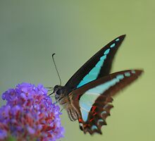 The Blue Triangle by rossco