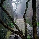 Misty path by richymac
