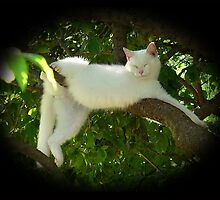 Lazy Twisted Cat-robatic Cat-tortionist Kitty by rpwalriven