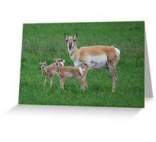 Antelope doe and fawns Greeting Card