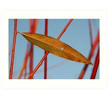 Leaf Elipse Art Print