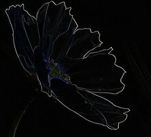 """""""Poppy of Delight"""" by Laurie Puglia"""