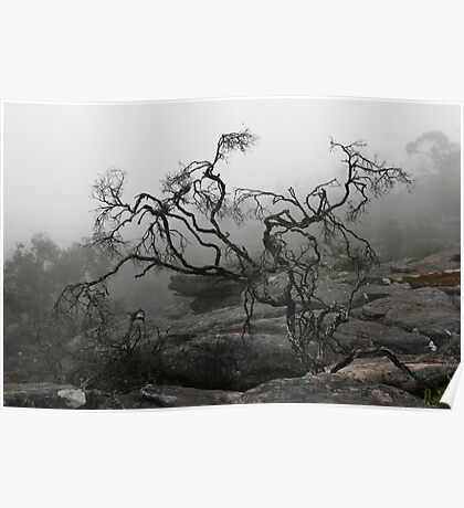 Rock Tree Poster