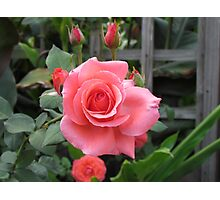 Roses And Buds Photographic Print