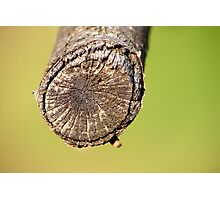 Just a piece of wood Photographic Print