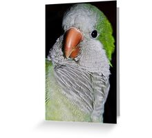 my buddy in detail  Greeting Card