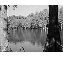 Trees in Water Photographic Print