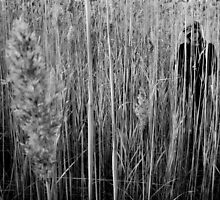 Hide (BW) by Andrew Mark