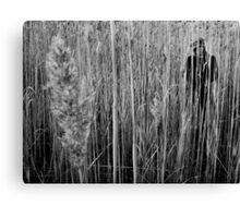 Hide (BW) Canvas Print