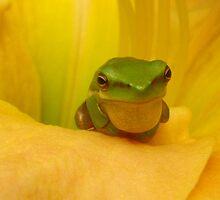 vocal frog by Belinda Cottee