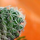 Cactus by ~ Fir Mamat ~
