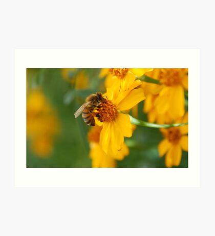 A BEE Art Print