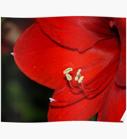 Red Satin Poster