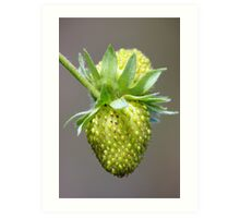 Green Strawberries Art Print