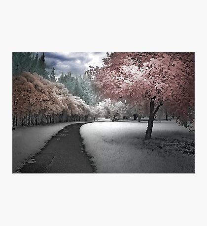 Parkland Path Photographic Print