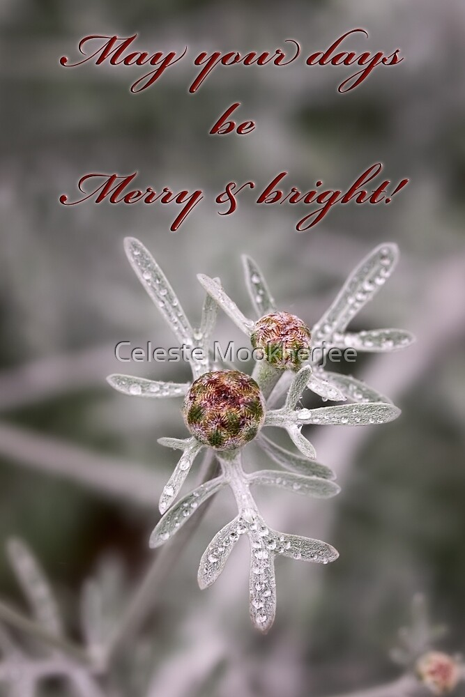 Ruby buds on silver - card by Celeste Mookherjee