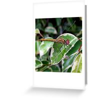 Dragon on Ficus Greeting Card
