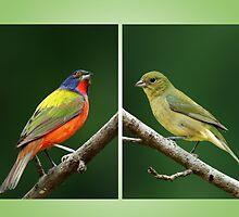 Birds Calendar by Bonnie T.  Barry