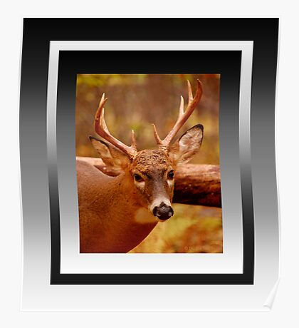 Deep in Thought (reframed for wall art/prints) Poster