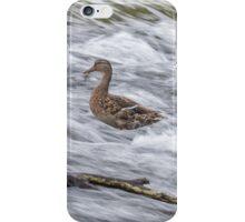 White Water Mallard -The Offering iPhone Case/Skin