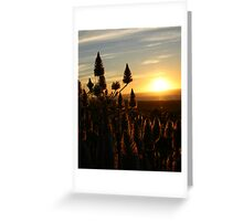 Mulla Mulla sunset Greeting Card
