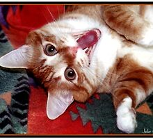 Too Much Catnip! by Julie's Camera Creations <><