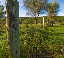 Fence & Tree by Kingston  Liu