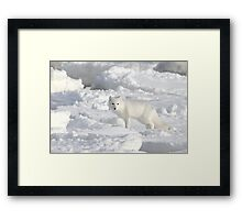 White on White. Arctic Fox #1, on the Tundra, Hudson Bay, Canada Framed Print