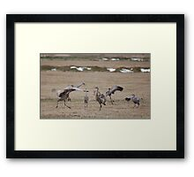 Sandhill Cranes Courting Ritual Framed Print
