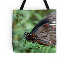 Zebra Longwing butterfly. Tote Bag