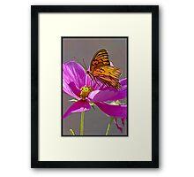 Gulf Fritillary Butterfly. Framed Print