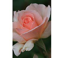 Blushing Photographic Print
