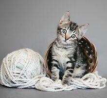 Yarn Tabby by AndreaBorden