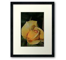 Yellow Collar Framed Print