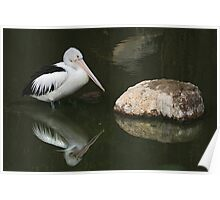 Reflections of a pelican Poster