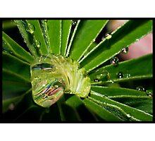 Water Grub Photographic Print