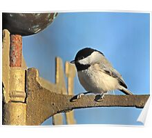 Chickadee on Christmas Morning Poster