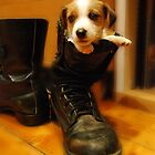 Pups in a Boot by Kingston  Liu