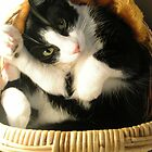 Boris in a basket by Elgee