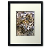 Golden Winged Dragon of the West Framed Print