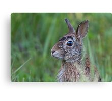 Wet Hare Canvas Print